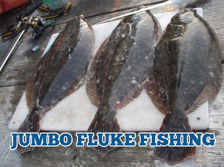 NJ Fluke Fishing